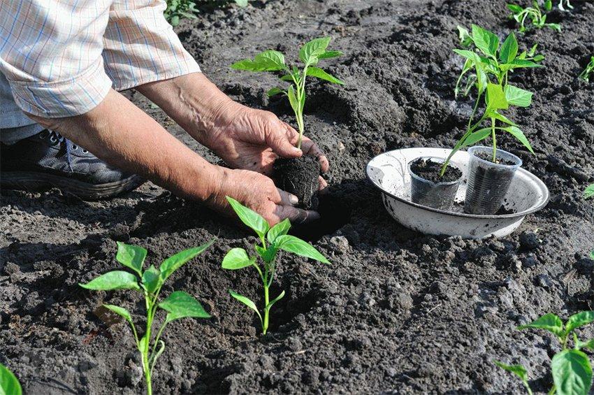 Планировка огорода— готовимся к посадке овощей на грядки