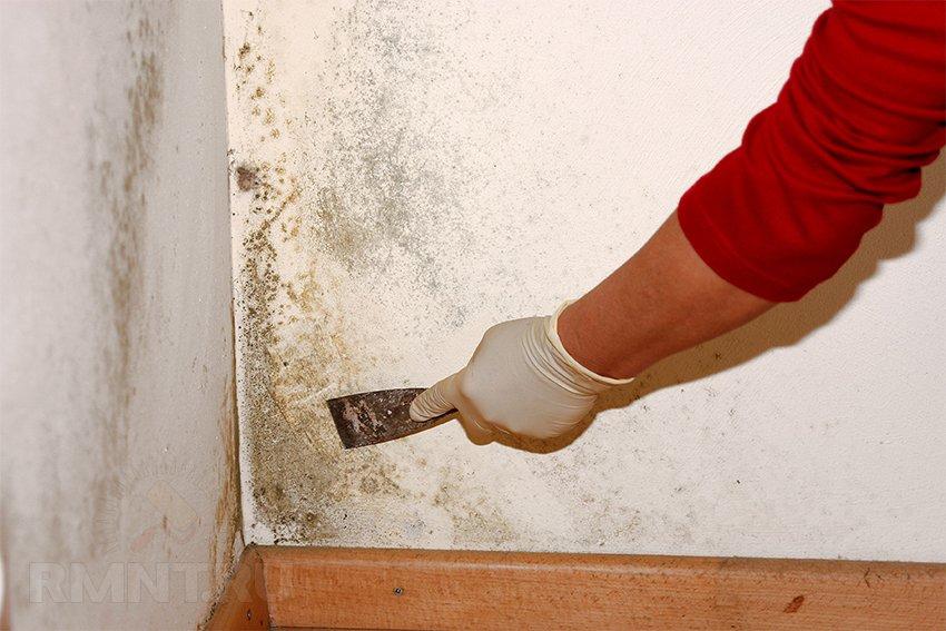 Как избавиться от плесени в доме или квартире в несколько шагов