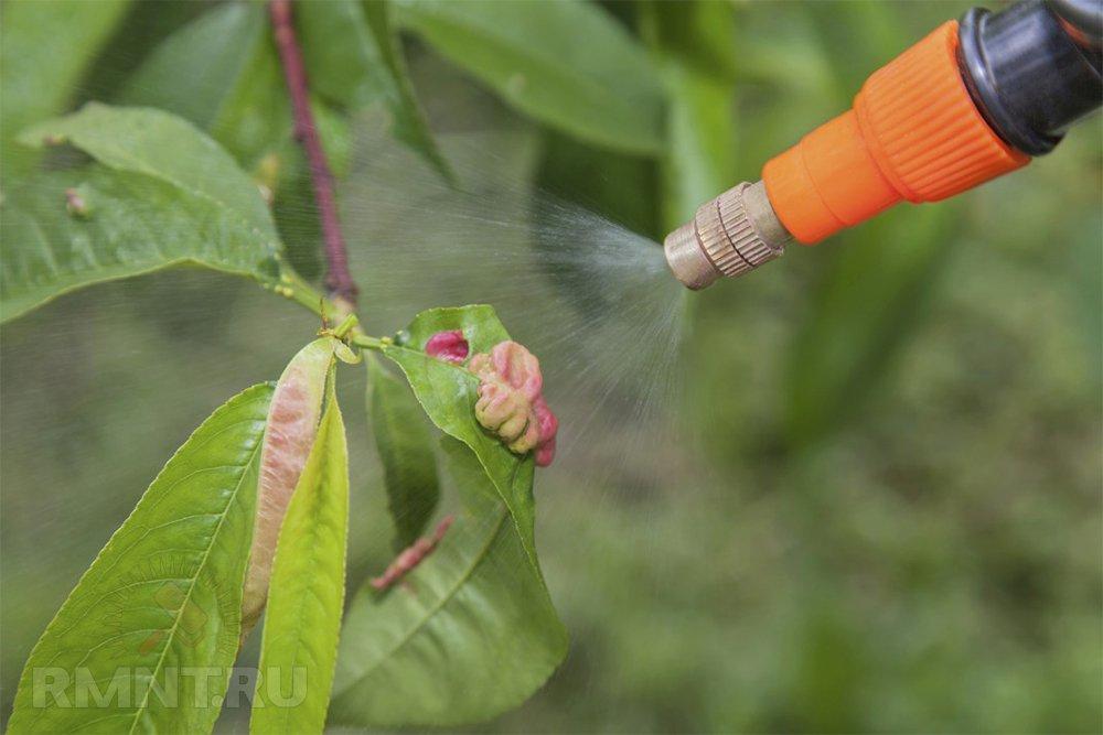 Обработка персикового дерева от вредителей и болезней