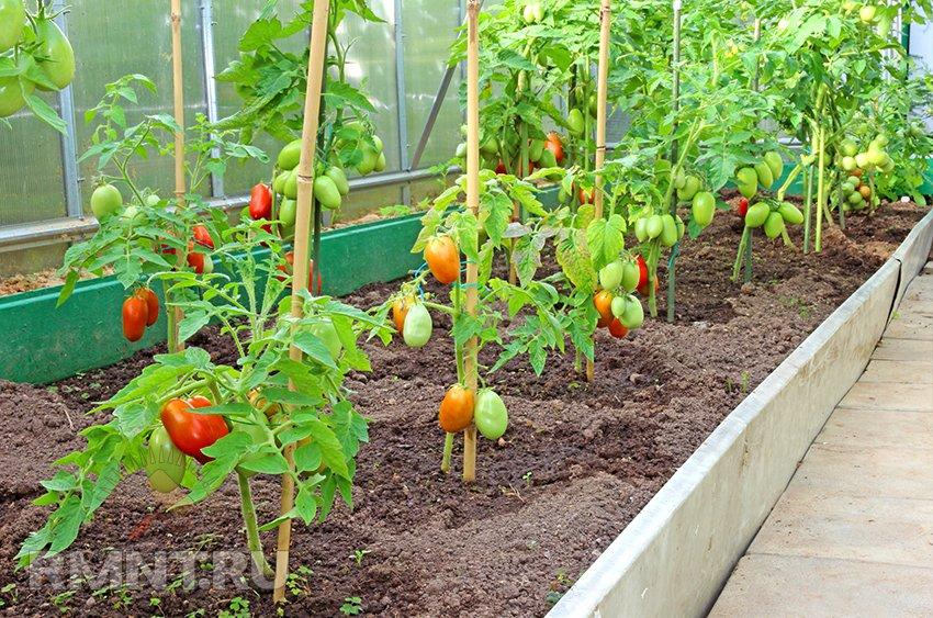 Уход за овощами в теплице