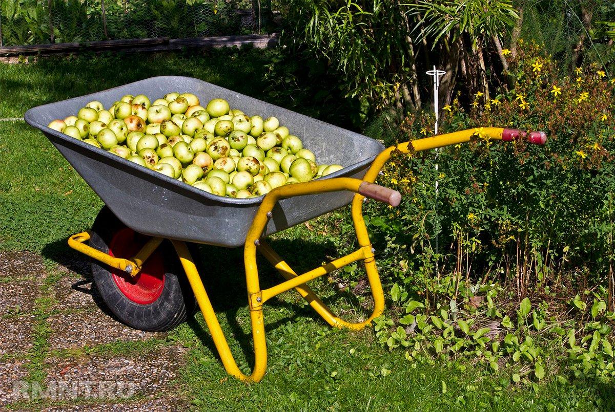 Как выбрать садовую тележку, тачку для бытовых нужд