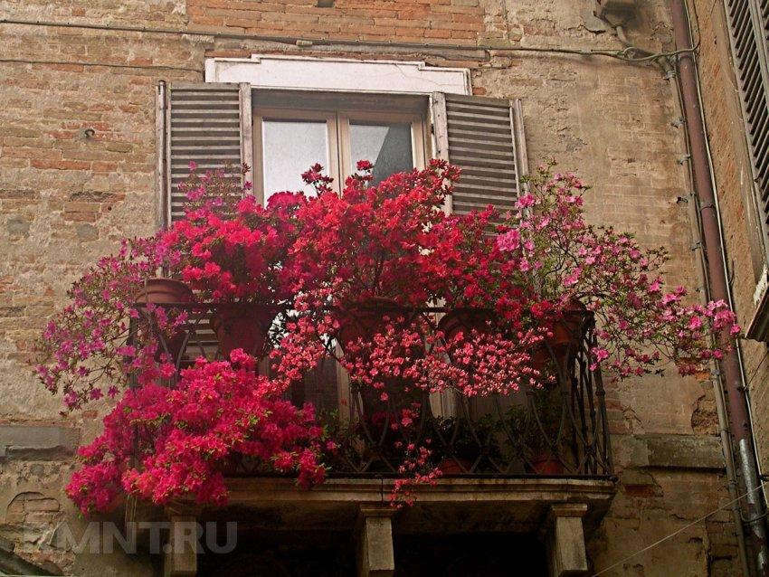 Цветы для северного окна с